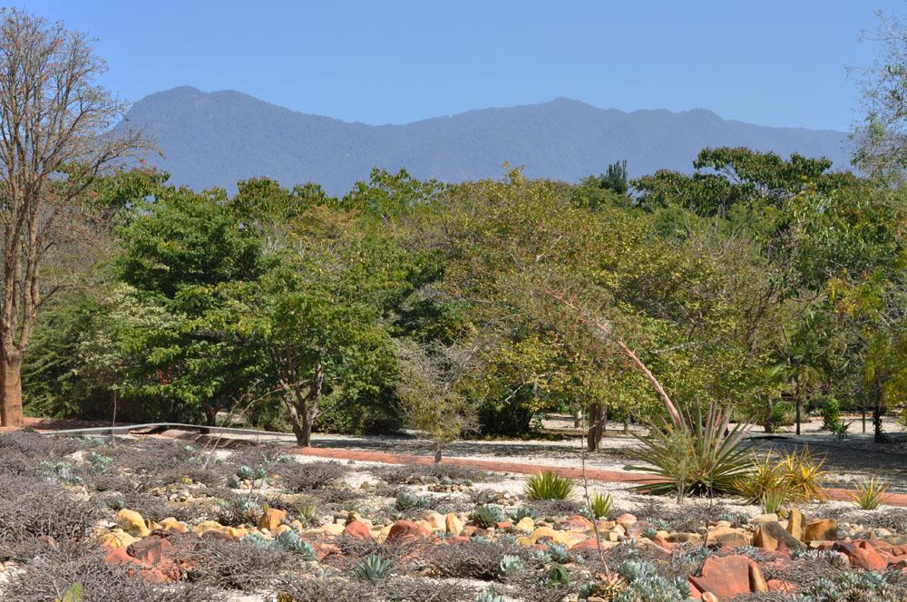 Jard n etnobot nico de oaxaca qu pasa oaxaca for Jardin etnobotanico oaxaca